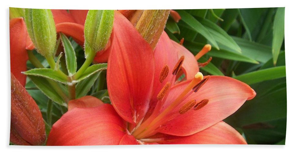 Flower Beach Towel featuring the photograph Flower Close Up 4 by Anita Burgermeister