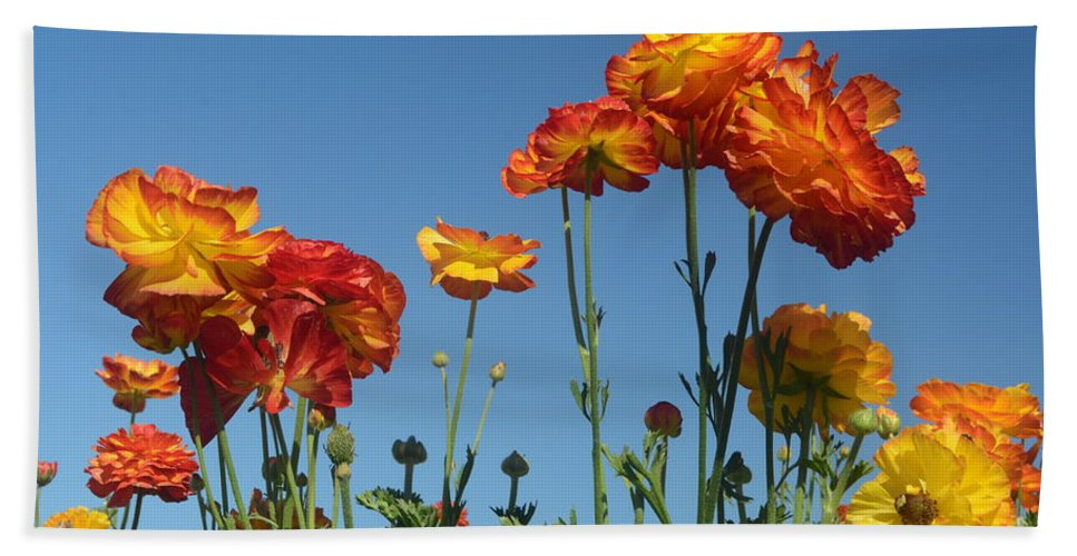 The Flower Fields At Carlsbad Beach Towel featuring the photograph Flower Dance by Luv Photography
