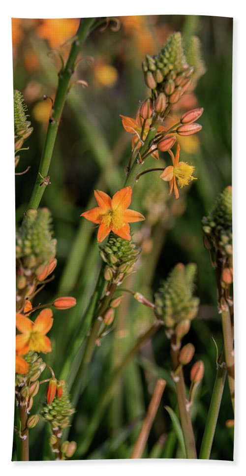 Flower Beach Towel featuring the photograph Flower Forest by Susan Wright