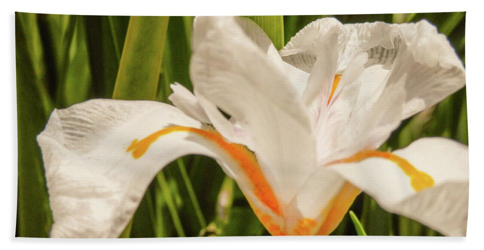 White Yellow Flower Grass Beauty In Nature Beach Towel featuring the photograph Flower In The Grass by Melisa Torres