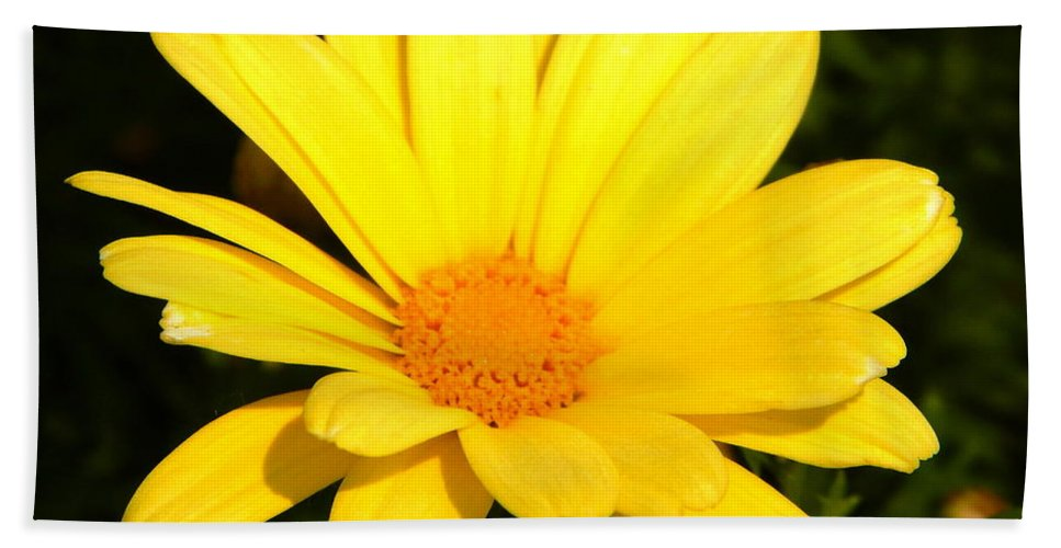 Yellow Beach Towel featuring the photograph Flower Of Sunshine by JoAnne Burgess