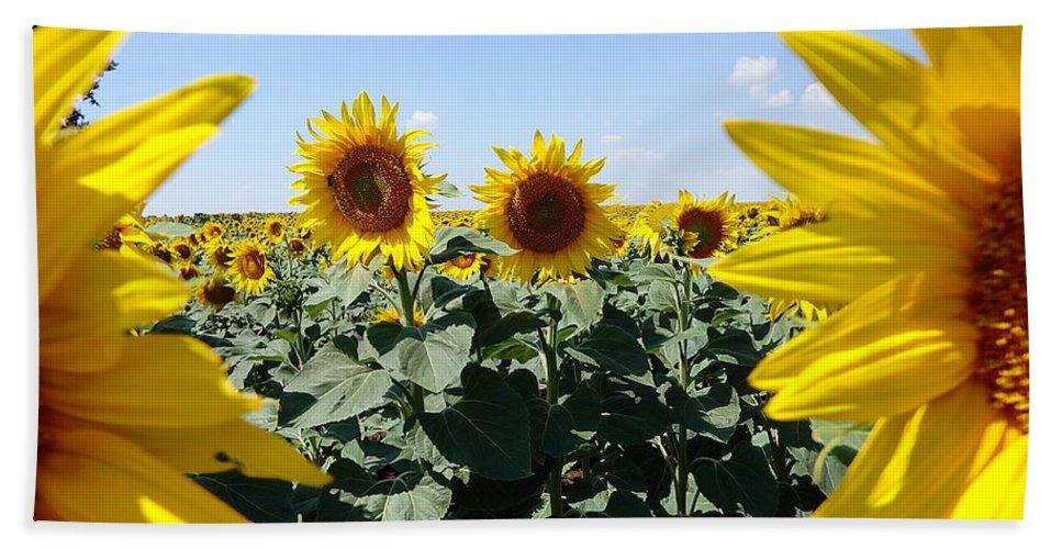 Field Beach Towel featuring the photograph Flower Sunflower,yellow Flower, by Danler Sk