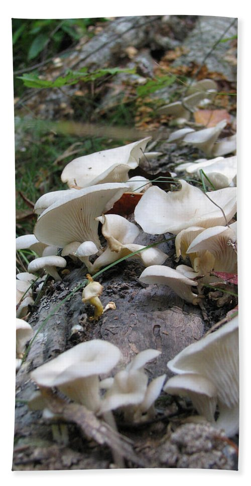 Mushroom Beach Towel featuring the photograph Flowering Fungi by Stacey May