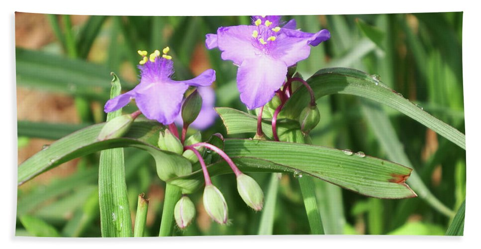 Purple Beach Towel featuring the photograph Flowers And Raindrops by Cathy Harper