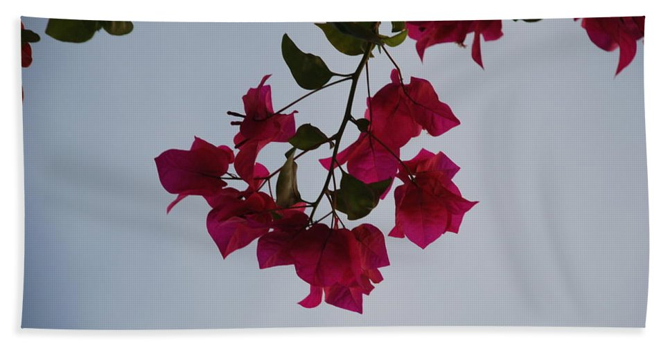 Flowers Beach Towel featuring the photograph Flowers In The Sky by Rob Hans