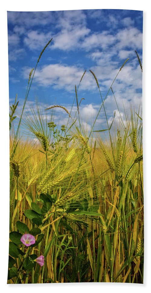 Appalachia Beach Towel featuring the photograph Flowers In The Wheat by Debra and Dave Vanderlaan