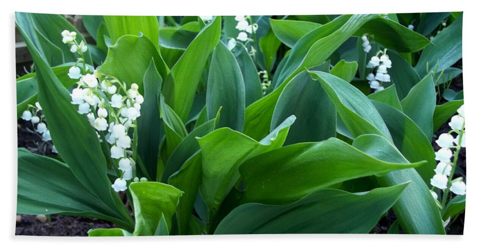 Lilly Of The Valley Beach Towel featuring the photograph Flowers Of Hapiness by Augustus Gallia