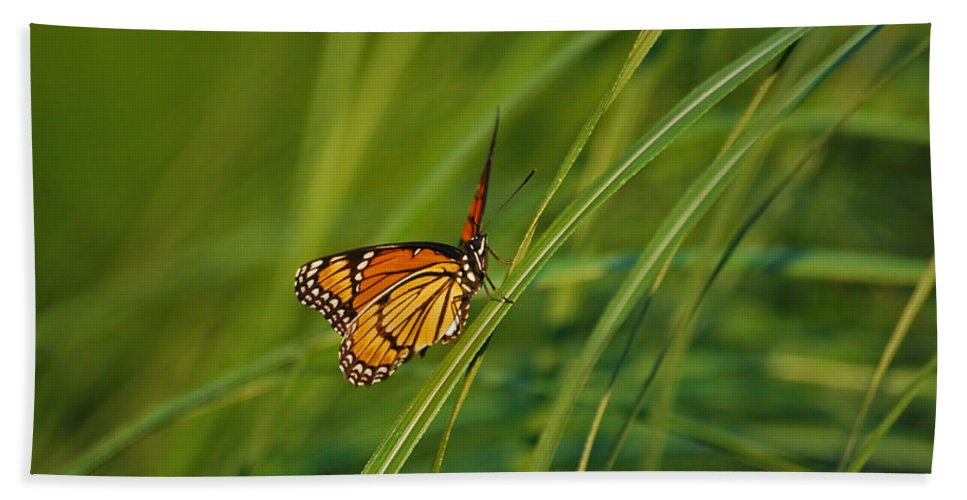 Monarch Beach Towel featuring the photograph Fluttering Through The Summer Grass by Lori Tambakis