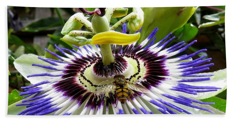 Fly Beach Towel featuring the photograph Fly On A Passion Flower by John Topman