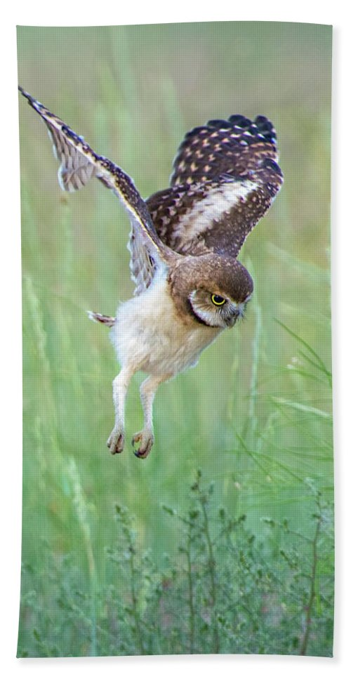 Burrowing Owls Beach Towel featuring the photograph Flying Baby Burrowing Owl by Judi Dressler