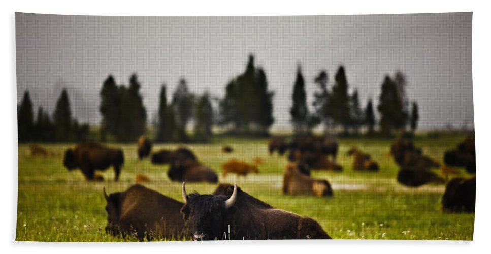 Nature Beach Towel featuring the photograph Foggy Herd by John K Sampson
