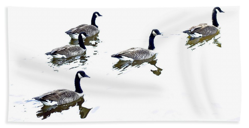 2d Beach Towel featuring the photograph Follow The Leader by Brian Wallace
