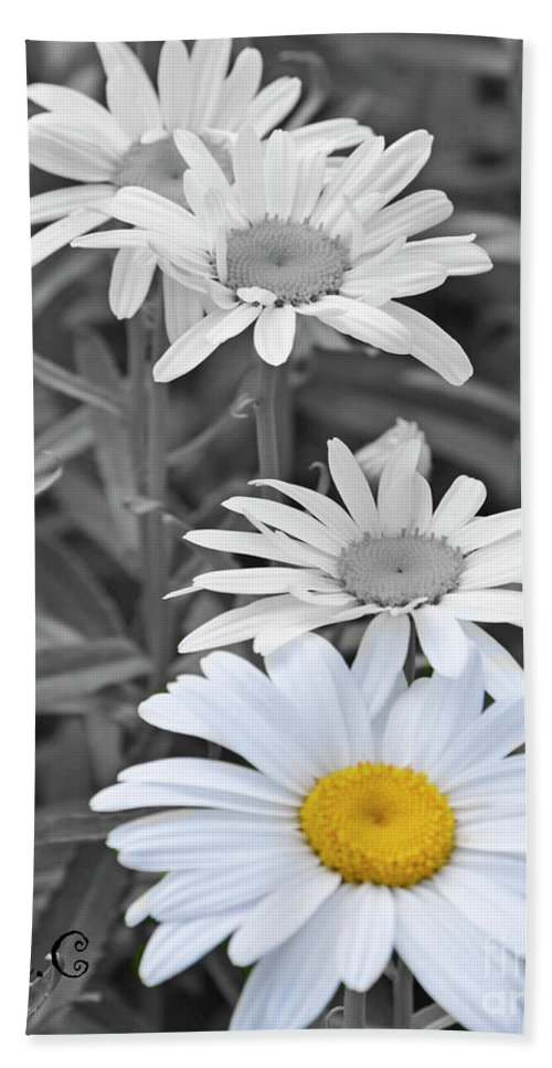 Pop Beach Towel featuring the photograph For The Love Of Daisy by Traci Cottingham