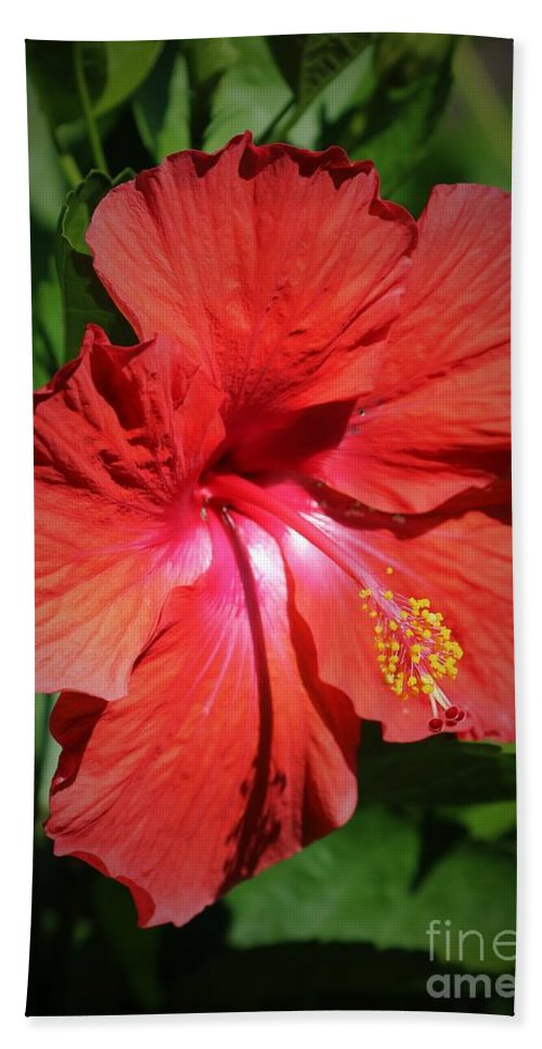 Red Beach Towel featuring the photograph For The Love Of Hibiscus by Diann Fisher