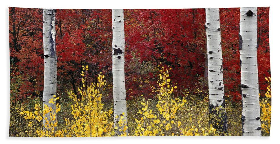 Idaho Scenics Beach Towel featuring the photograph Forest Color by Leland D Howard