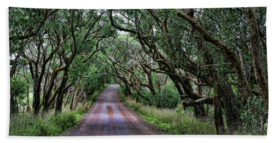 Trees Beach Towel featuring the photograph Forest Corridor by Douglas Barnard