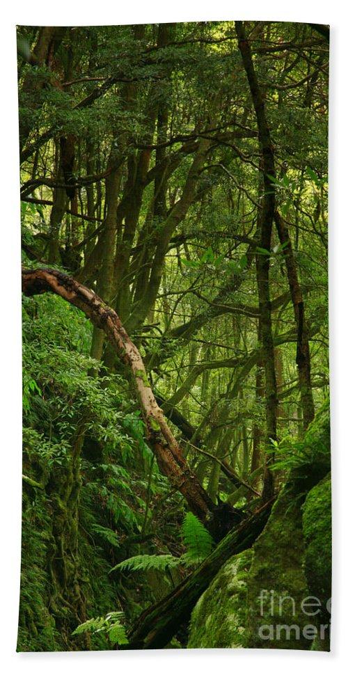 Woodland Beach Towel featuring the photograph Forest by Gaspar Avila