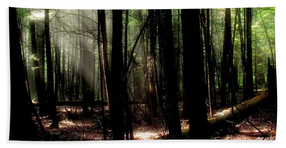 Trees Beach Towel featuring the photograph Forest Light by Douglas Stucky