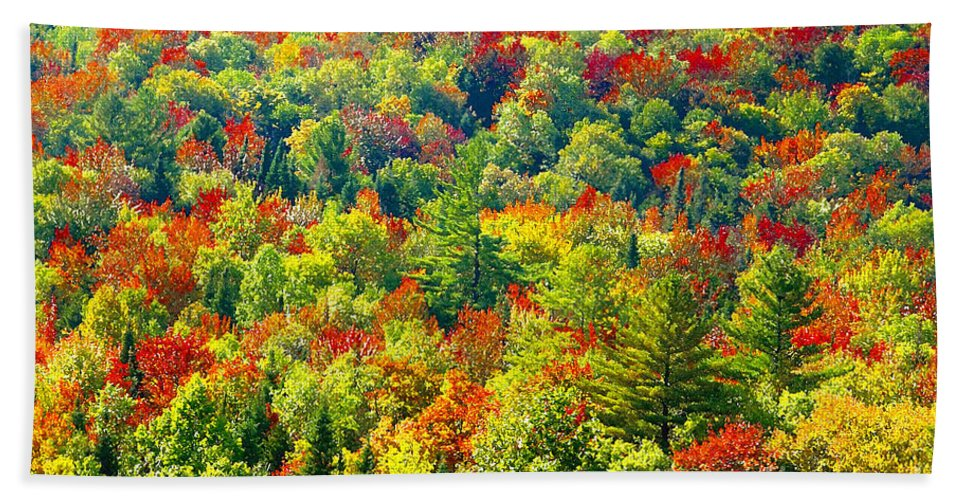 Forest Beach Sheet featuring the photograph Forest Of Color by David Lee Thompson
