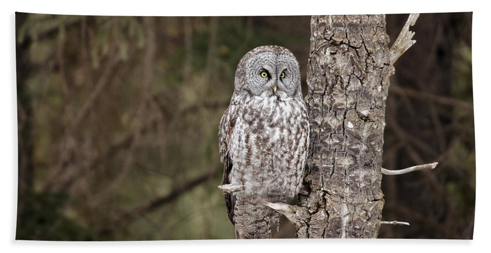 Great Grey Beach Towel featuring the photograph Forest Sentry by Shannon Carson