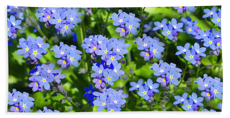 Forget-me-not Beach Towel featuring the photograph Forget Me Not Macro by Lena Photo Art