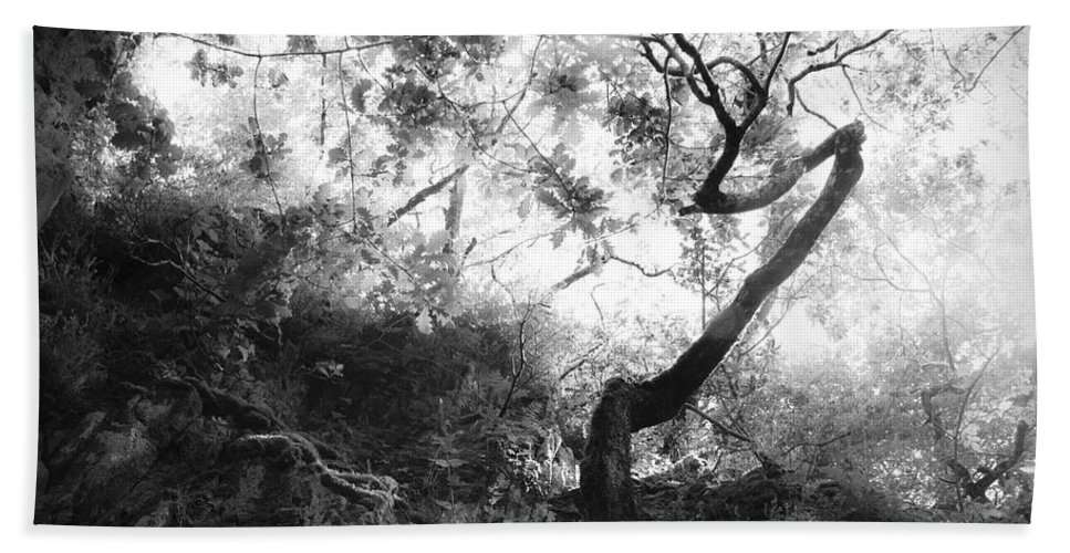 Tree Beach Towel featuring the photograph Forgetting by Dorit Fuhg