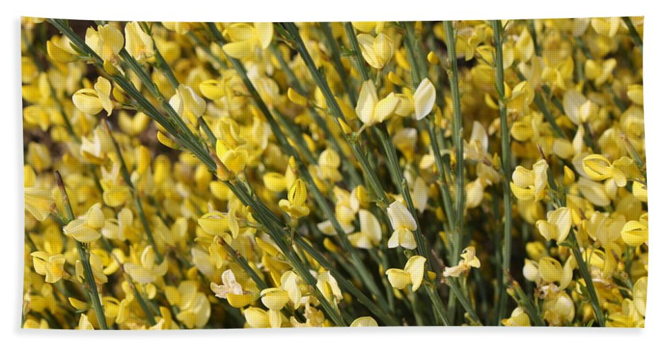 Spring Flowers Beach Towel featuring the photograph Forsythia by Carol Groenen