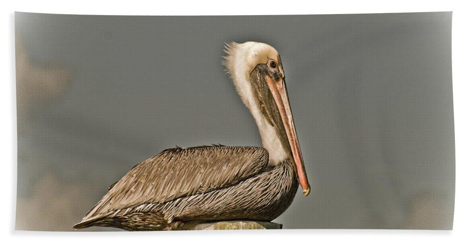 Bird Beach Towel featuring the photograph Fort Pierce Pelican by Trish Tritz