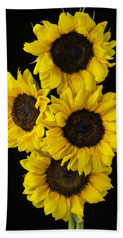 Vertical Beach Towel featuring the photograph Four Sunny Sunflowers by Garry Gay
