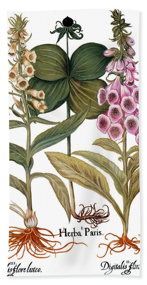 1613 Beach Towel featuring the photograph Foxglove And Herb Paris by Granger