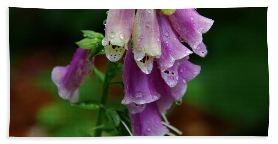 Foxglove Beach Towel featuring the photograph Foxgloves In The Rain by Susanne Van Hulst