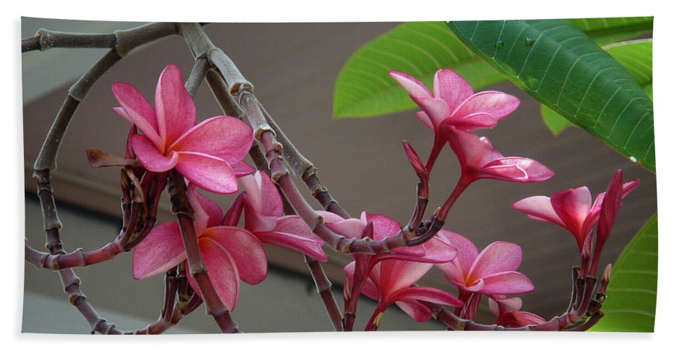 Flower Beach Towel featuring the photograph Frangipani Flowers by Susanne Van Hulst