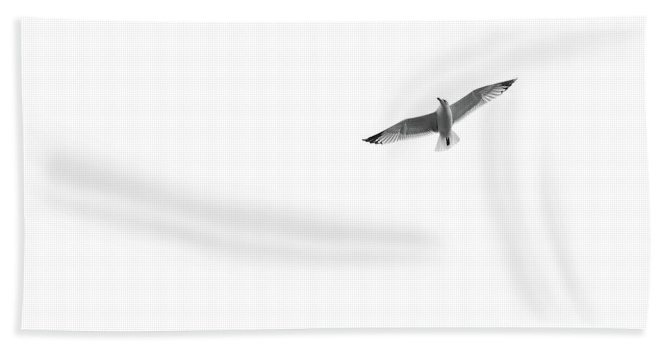 Seagull Beach Towel featuring the photograph Freedom In The Sky by Konstantin Khanov
