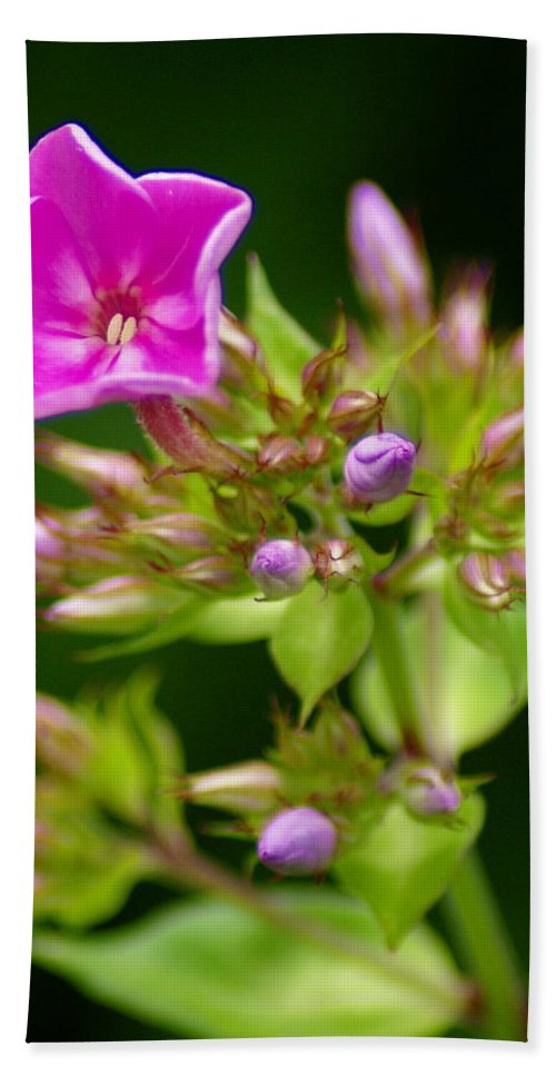Flowers Beach Towel featuring the photograph Fresh And Happy by Ben Upham III