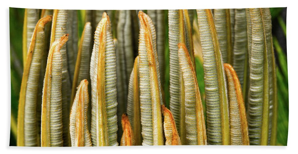 Cycad Beach Towel featuring the photograph Fresh Fronds by Christopher Holmes