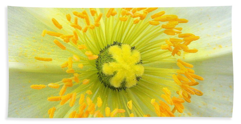 Yellow Flower Beach Towel featuring the photograph Freshness by Matthew Wilson