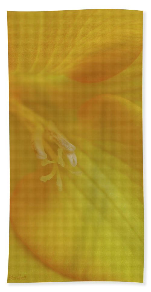 Flower Beach Towel featuring the photograph Friendly Offer by Donna Blackhall