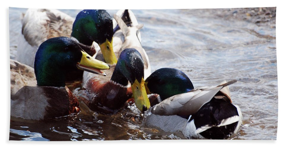 Mallards Beach Towel featuring the photograph Friends Til The End by Lori Tambakis
