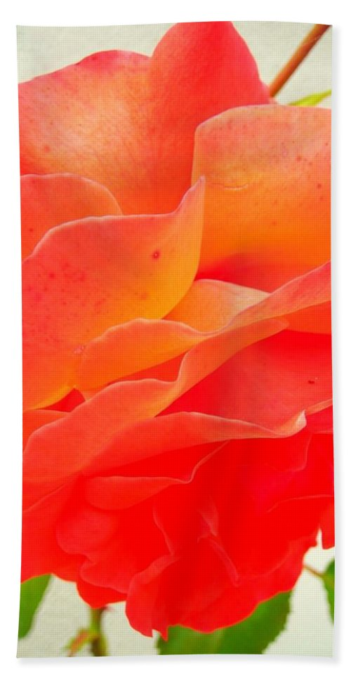 Flower Beach Towel featuring the photograph Friendship by Juergen Weiss