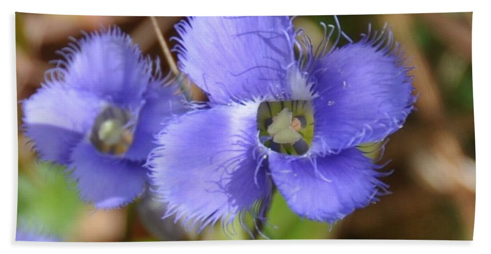 Flower Beach Towel featuring the photograph Fringed Gentian 1 by Rich Bodane