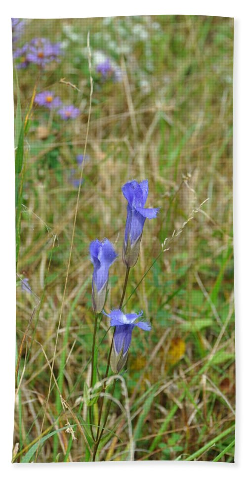 Flower Beach Towel featuring the photograph Fringed Gentian 2 by Rich Bodane