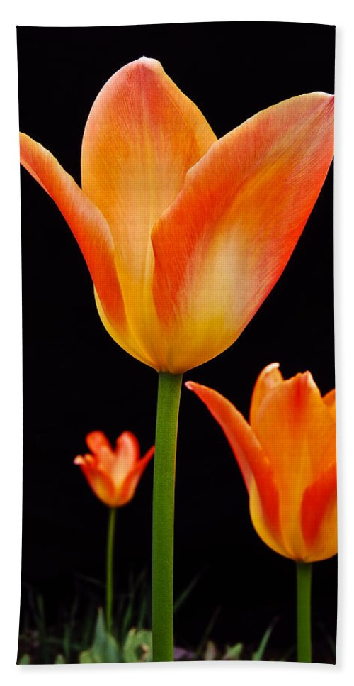 Tulip Beach Towel featuring the photograph Front Runner by Michael Peychich
