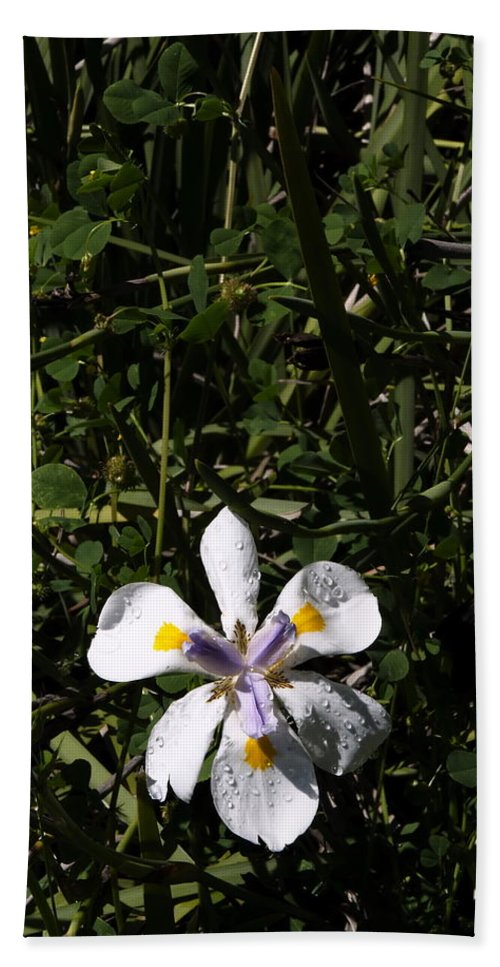 Landscape Beach Towel featuring the photograph Frontyard by Richard Thomas