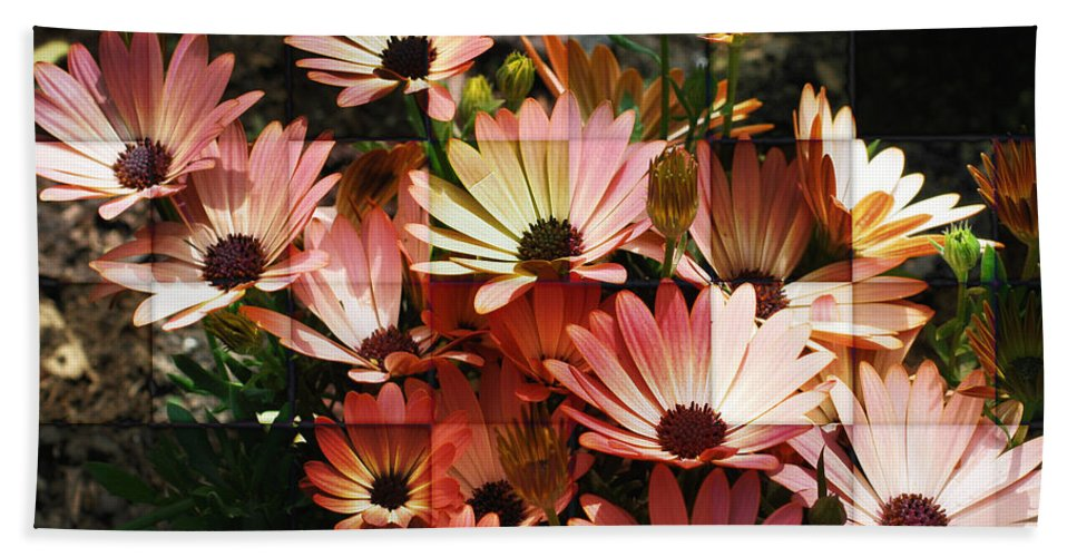 Flower Beach Towel featuring the photograph Frosted African Daisies by Smilin Eyes Treasures