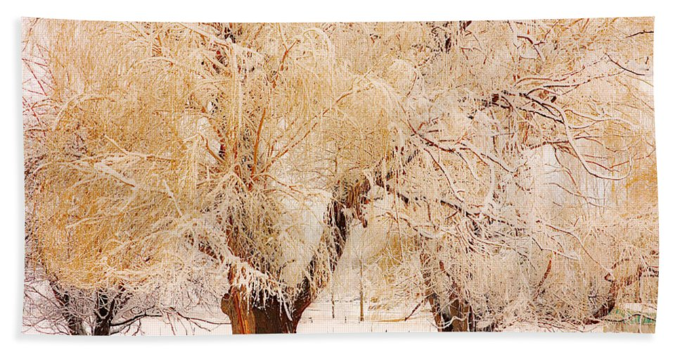 Trees Beach Towel featuring the photograph Frosted Golden Trees by James BO Insogna