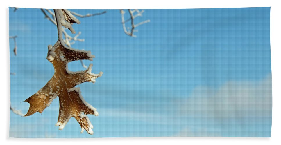 Frost Beach Towel featuring the photograph Frosty Leaf by David Arment