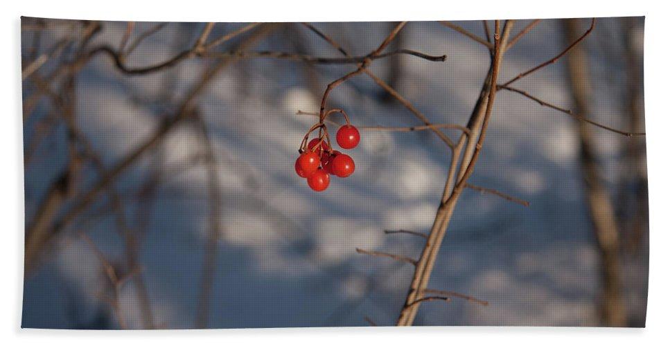 Winter Beach Towel featuring the photograph Frozen Berries by Deanna Paull