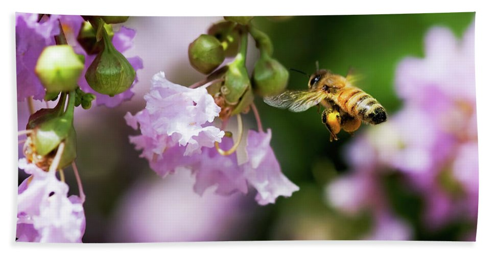 Honey Bee Beach Towel featuring the photograph Fully Loaded by Betty LaRue