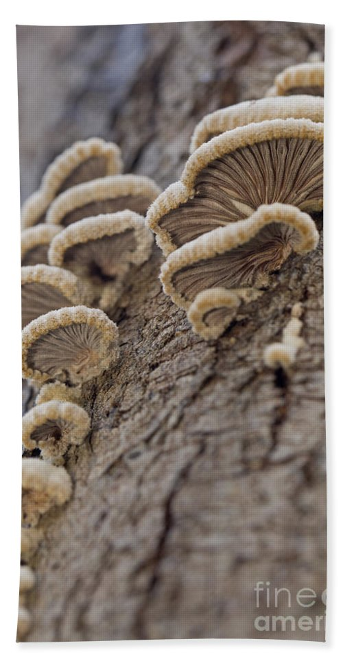 Poisonous Beach Towel featuring the photograph Fungui Growing On A Tree Trunk by Alon Meir