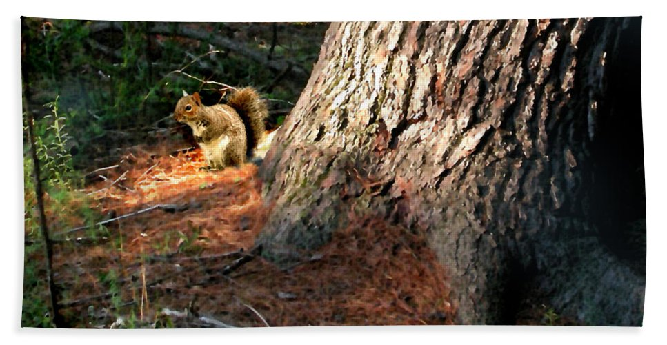 Squirrel Beach Towel featuring the painting Furry Neighbor by Paul Sachtleben